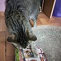 貓咪午茶時刻-鯖魚排_191203_0030.jpg
