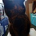 樂透貓咪餐盒-腎臟保健鴨肉100g_191207_0001.jpg