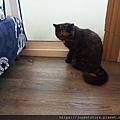 樂透貓咪餐盒-腎臟保健鴨肉100g_191207_0004.jpg