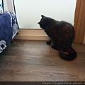 樂透貓咪餐盒-腎臟保健鴨肉100g_191207_0005.jpg