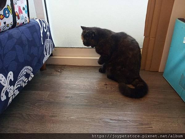 樂透貓咪餐盒-腎臟保健鴨肉100g_191207_0006.jpg