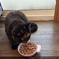 樂透貓咪餐盒-腎臟保健鴨肉100g_191207_0008.jpg