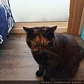 樂透貓咪餐盒-腎臟保健鴨肉100g_191207_0016.jpg