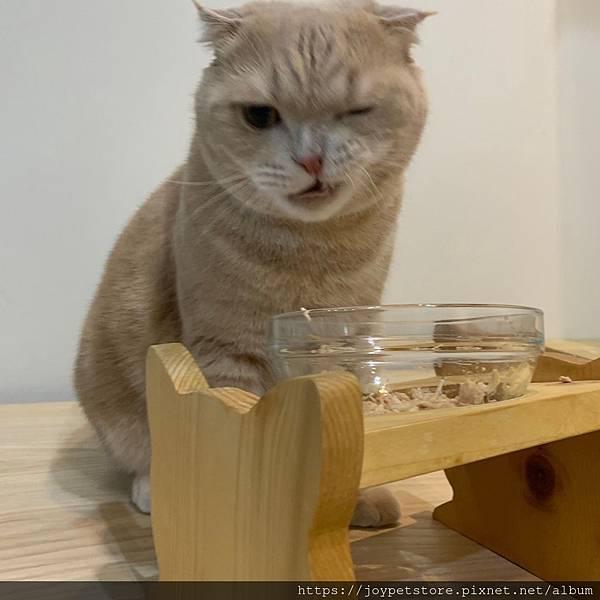 汪喵星球貓餐包薑黃佐南瓜土雞煲_191207_0009.jpg