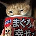 鮪魚添加嚴選有魚魚真幸福貓罐_191208_0046.jpg