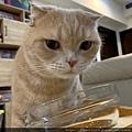 泥貓道鮮嫩純雞肉_191208_0017.jpg