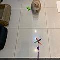 傑克森-蜻蜓逗貓棒_191216_0019.jpg