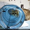 貓壹-奇幻隧道(藍)_200106_0001.jpg