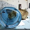 貓壹-奇幻隧道(藍)_200106_0002.jpg