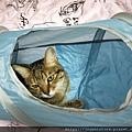 貓壹-奇幻隧道(藍)_200106_0004.jpg
