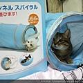 貓壹-奇幻隧道(藍)_200106_0007.jpg