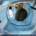 貓壹-奇幻隧道(藍)_200106_0005.jpg