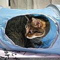 貓壹-奇幻隧道(藍)_200106_0010.jpg
