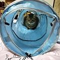 貓壹-奇幻隧道(藍)_200106_0012.jpg