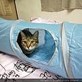 貓壹-奇幻隧道(藍)_200106_0013.jpg