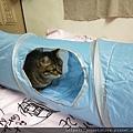 貓壹-奇幻隧道(藍)_200106_0014.jpg