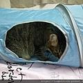 貓壹-奇幻隧道(藍)_200106_0011.jpg