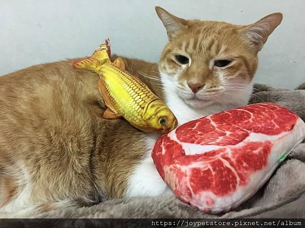 法米納幼貓海洋-鱈魚蝦肉南瓜_200204_0001.jpg