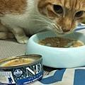 法米納幼貓海洋-鱈魚蝦肉南瓜_200204_0007.jpg