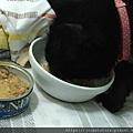 法米納幼貓海洋-鱈魚蝦肉南瓜_200204_0013.jpg