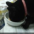 法米納幼貓海洋-鱈魚蝦肉南瓜_200204_0014.jpg