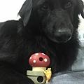L'CHIC CA-TUMBLE不倒翁漏食玩具-紅蘑菇_200117_0006.jpg
