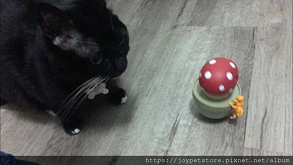 L'CHIC CA-TUMBLE不倒翁漏食玩具-紅蘑菇_200117_0005.jpg