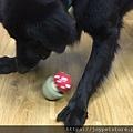 L'CHIC CA-TUMBLE不倒翁漏食玩具-紅蘑菇_200117_0008.jpg
