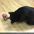L'CHIC CA-TUMBLE不倒翁漏食玩具-紅蘑菇_200117_0012.jpg
