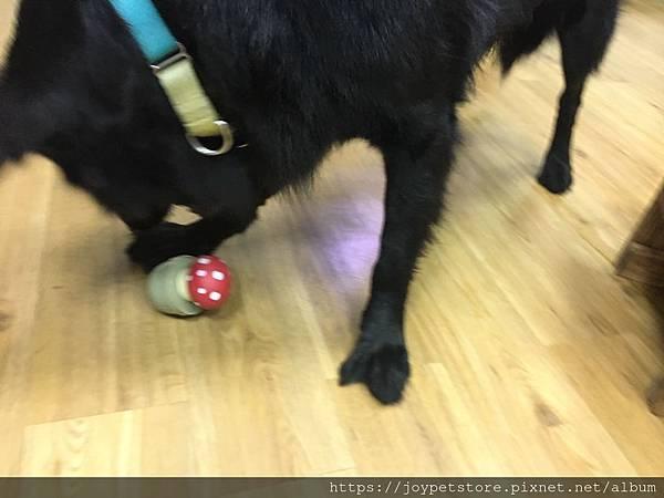 L'CHIC CA-TUMBLE不倒翁漏食玩具-紅蘑菇_200117_0011.jpg