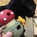 L'CHIC CA-TUMBLE不倒翁漏食玩具-紅蘑菇_200117_0017.jpg