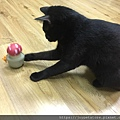 L'CHIC CA-TUMBLE不倒翁漏食玩具-紅蘑菇_200117_0014.jpg