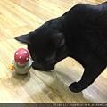 L'CHIC CA-TUMBLE不倒翁漏食玩具-紅蘑菇_200117_0016.jpg