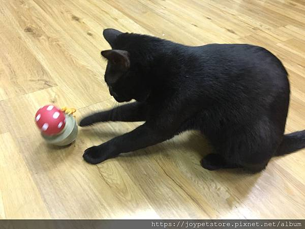 L'CHIC CA-TUMBLE不倒翁漏食玩具-紅蘑菇_200117_0015.jpg