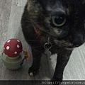 L'CHIC CA-TUMBLE不倒翁漏食玩具-紅蘑菇_200117_0028.jpg