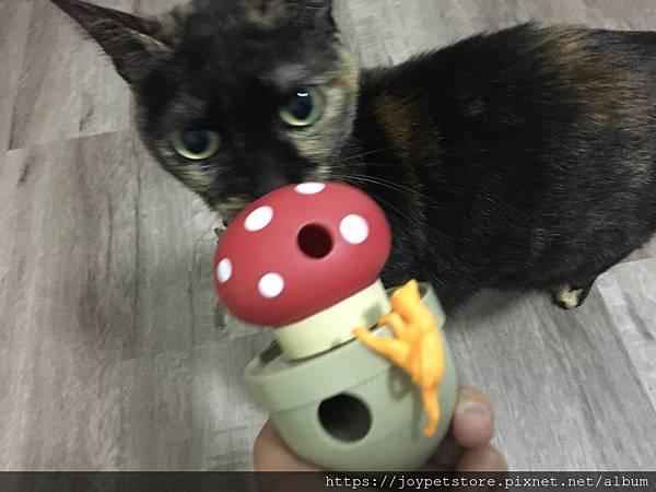 L'CHIC CA-TUMBLE不倒翁漏食玩具-紅蘑菇_200117_0030.jpg