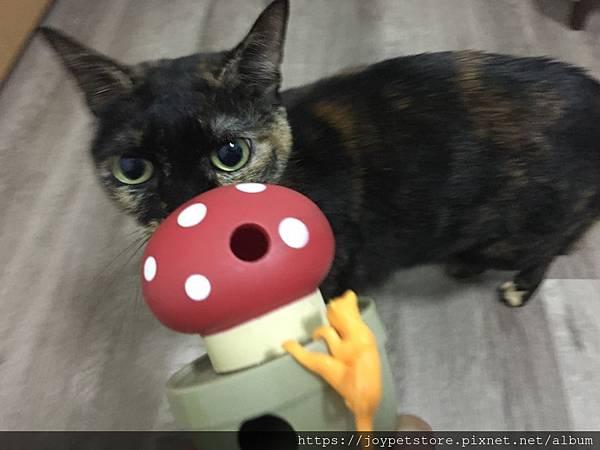 L'CHIC CA-TUMBLE不倒翁漏食玩具-紅蘑菇_200117_0029.jpg