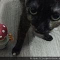 L'CHIC CA-TUMBLE不倒翁漏食玩具-紅蘑菇_200117_0031.jpg