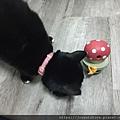 L'CHIC CA-TUMBLE不倒翁漏食玩具-紅蘑菇_200117_0033.jpg