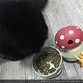 L'CHIC CA-TUMBLE不倒翁漏食玩具-紅蘑菇_200117_0035.jpg