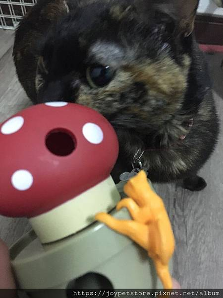 L'CHIC CA-TUMBLE不倒翁漏食玩具-紅蘑菇_200117_0032.jpg