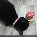 L'CHIC CA-TUMBLE不倒翁漏食玩具-紅蘑菇_200117_0034.jpg