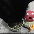 L'CHIC CA-TUMBLE不倒翁漏食玩具-紅蘑菇_200117_0037.jpg