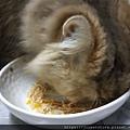 愛普士-雞胸肉南瓜_200229_0004.jpg