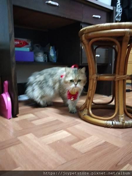 愛普士-雞胸肉南瓜_200229_0031.jpg
