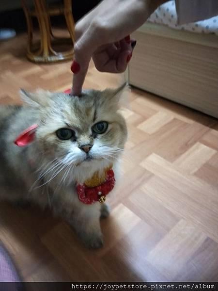 愛普士-雞胸肉南瓜_200229_0032.jpg