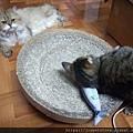 貓咪旺-貓薄荷大秋刀魚_191225_0003.jpg