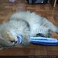 貓咪旺-貓薄荷大秋刀魚_191225_0010.jpg