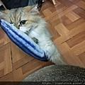 貓咪旺-貓薄荷大秋刀魚_191225_0012.jpg