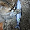 貓咪旺-貓薄荷大秋刀魚_191225_0016.jpg